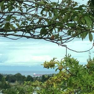 Ocean View From VIU Parking Lot Nanaimo BC