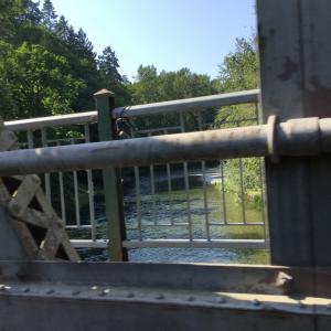 Crossing Bridge in Duncan BC