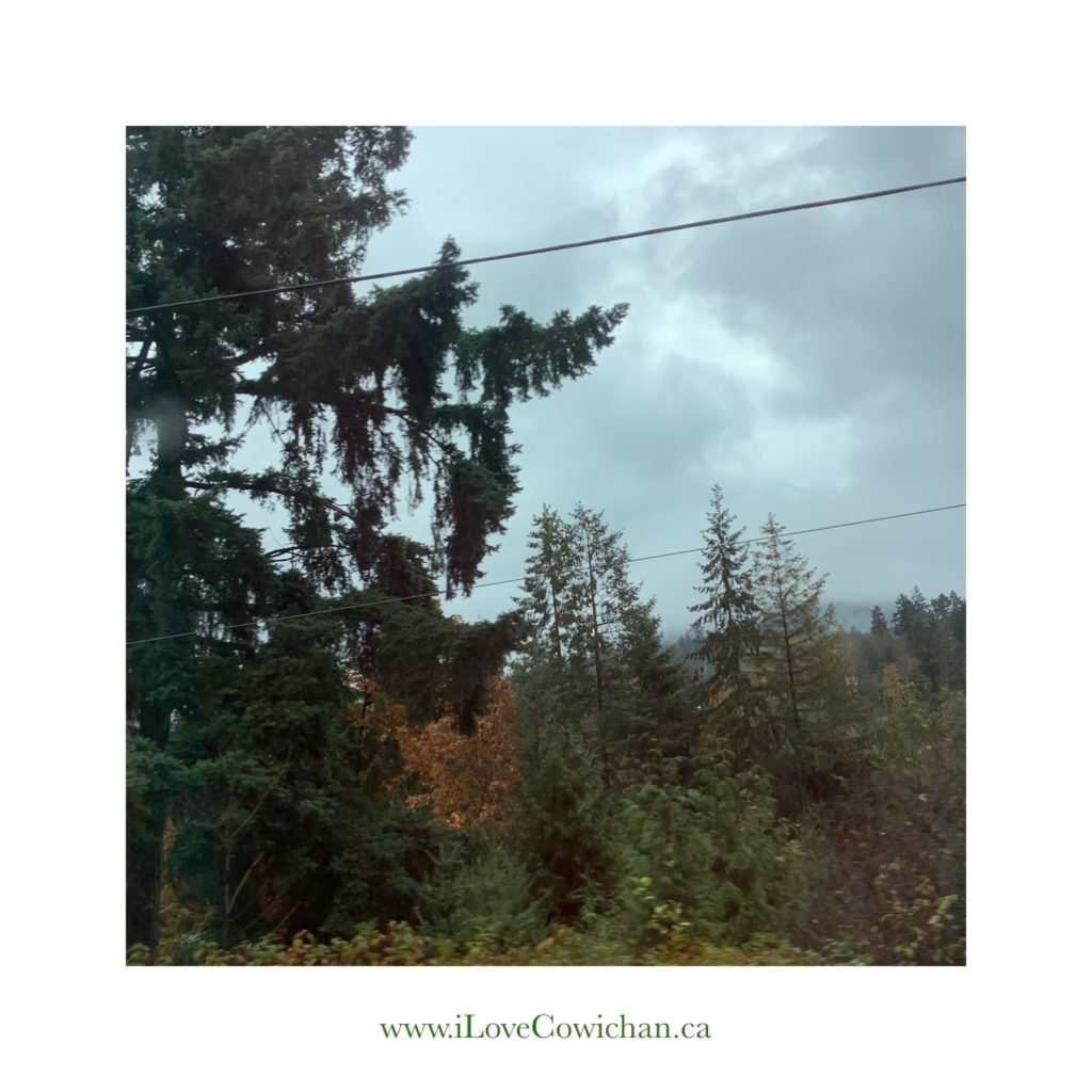 Rainy Day Drive to Nanaimo I Love Cowichan Blog Post October 2019