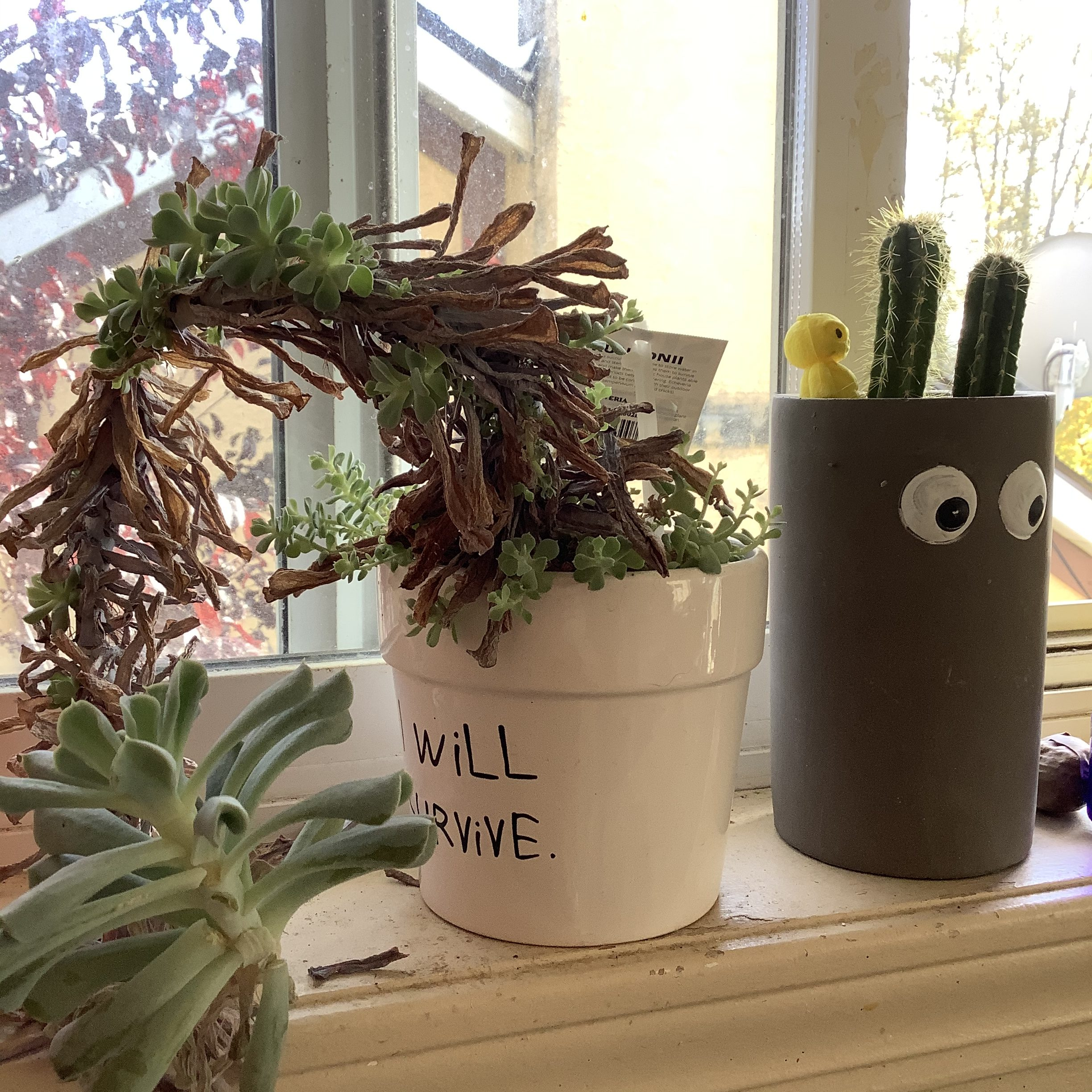 Cactus Googly Eye Planter and Succulent Plant
