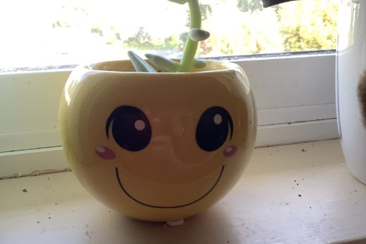 Smiley Face Succulent Planter in Window Sill