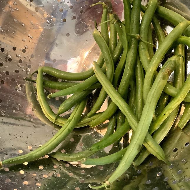 Green beans Italian Style, fresh from the garden to plate in less than 30 minutes. Frozen works too!